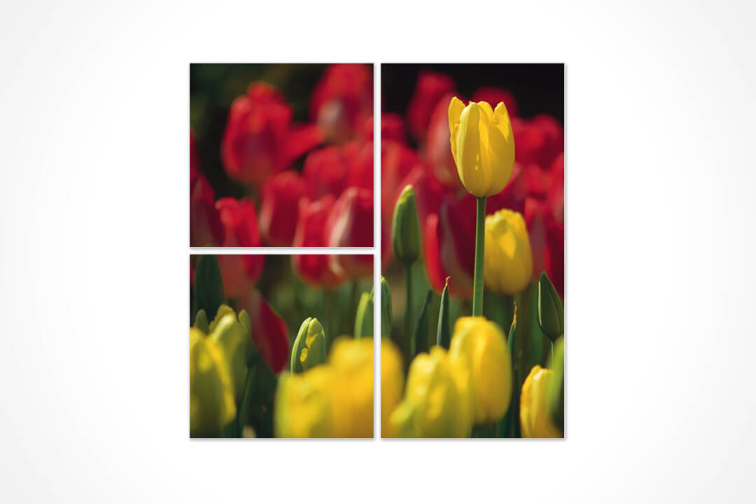 3 Parça Karma - Çiçekler 02