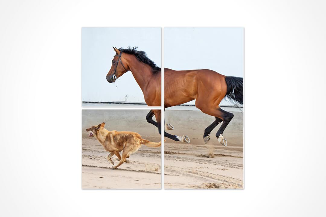 3 Parça Karma - Hayvanlar 11