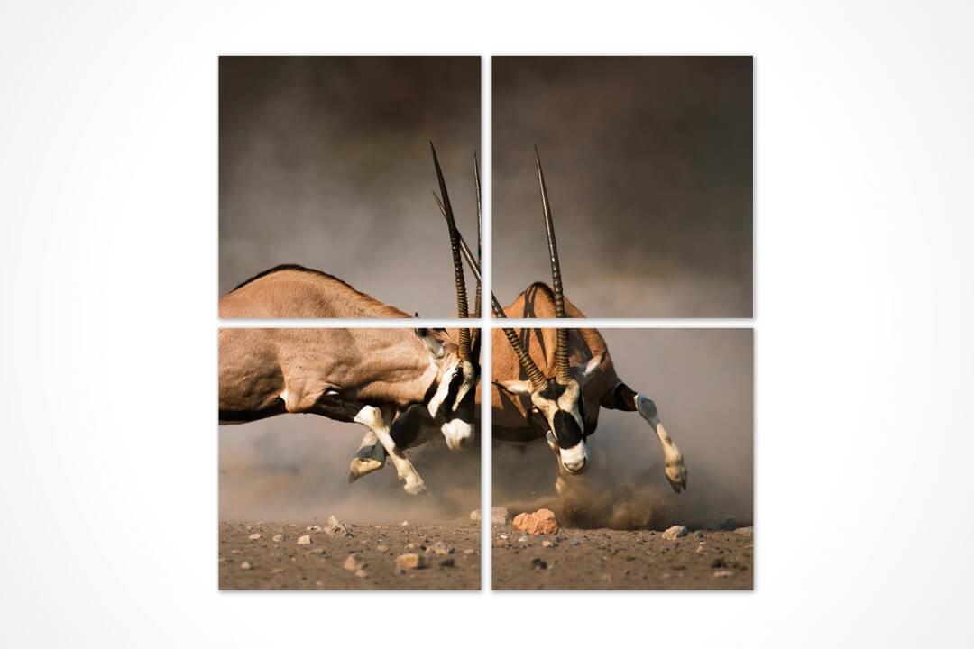 4 Parça Kare - Hayvanlar 18